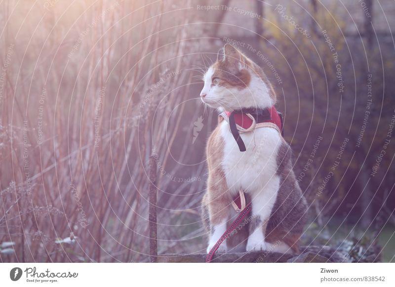 Cat Red Calm Animal Garden Brown Dream Orange Elegant Contentment Bushes Sit Esthetic Observe Cool (slang) Curiosity