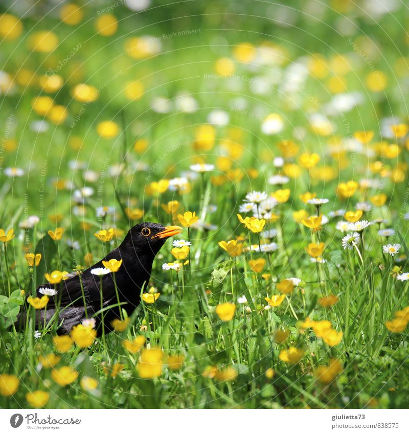 Nature Plant Beautiful Green Summer Animal Yellow Meadow Grass Blossom Happy Garden Bird Idyll Perspective Observe