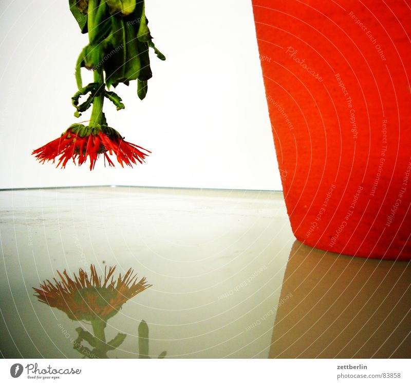 birthday Glass table Downward trend Flower Vase Aster Gladiola Droop Reflection Red Blossom Stalk Converse Change in direction To dry up Under Blossoming
