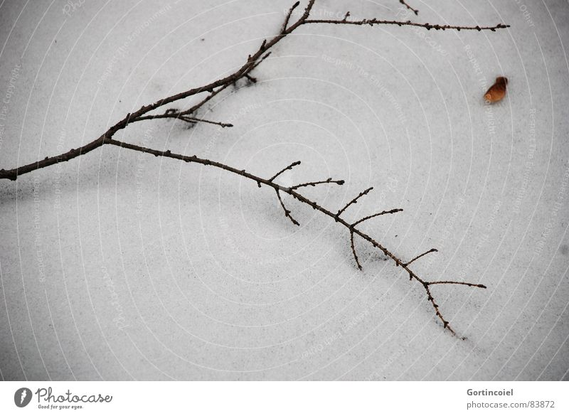 silence of the grave Winter Snow Ice Frost Wood Dark Gloomy Brown Black White Grave Cemetery Snow layer Twig Branch Sadness Cold Death Calm Concern Grief