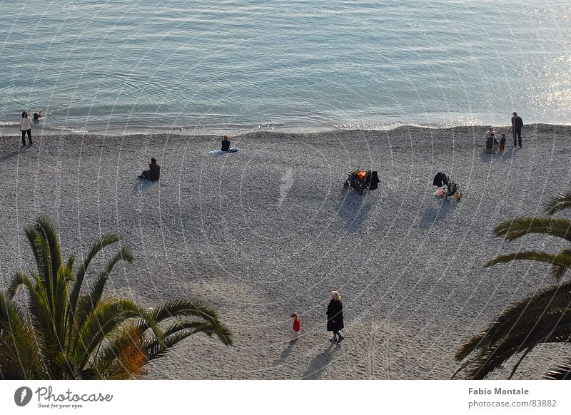 Ocean Leisure and hobbies Italy Palm tree Sunday Liguria Pebble beach Santa Margherita Ligure