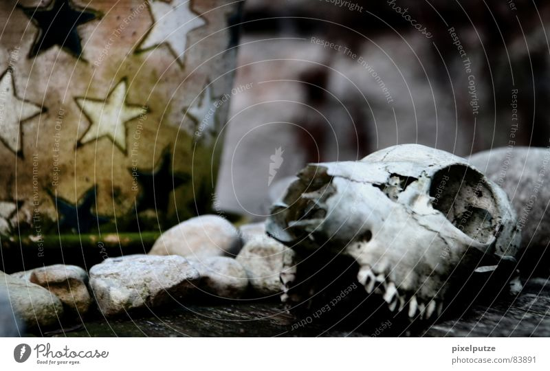 Nature Animal Life Death Wood Stone Cat Table Star (Symbol) Grief Transience Point Past Distress Mammal Difference