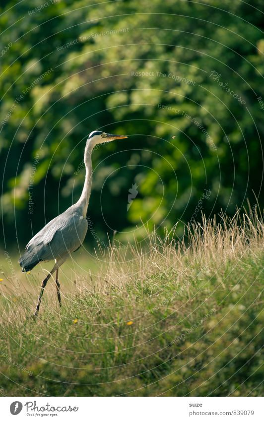 Nature Green Summer Landscape Animal Environment Meadow Natural Bird Park Wild Elegant Wild animal Authentic Feather Esthetic