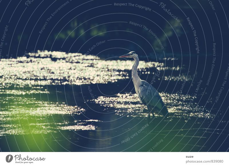 In the sparkle of silence Elegant Environment Nature Landscape Animal Elements Water Pond Lake Wild animal Bird 1 Glittering Wait Esthetic Authentic Exceptional
