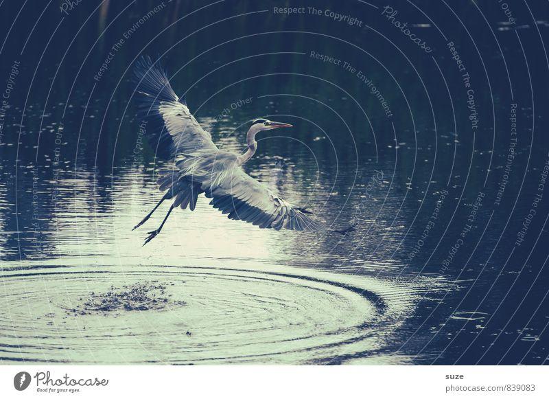 Nature Water Landscape Animal Environment Movement Natural Lake Flying Bird Wild Elegant Wild animal Authentic Esthetic Beginning