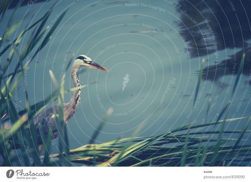 Nature Blue Water Landscape Animal Environment Natural Lake Bird Wild Elegant Wild animal Authentic Wait Feather Esthetic