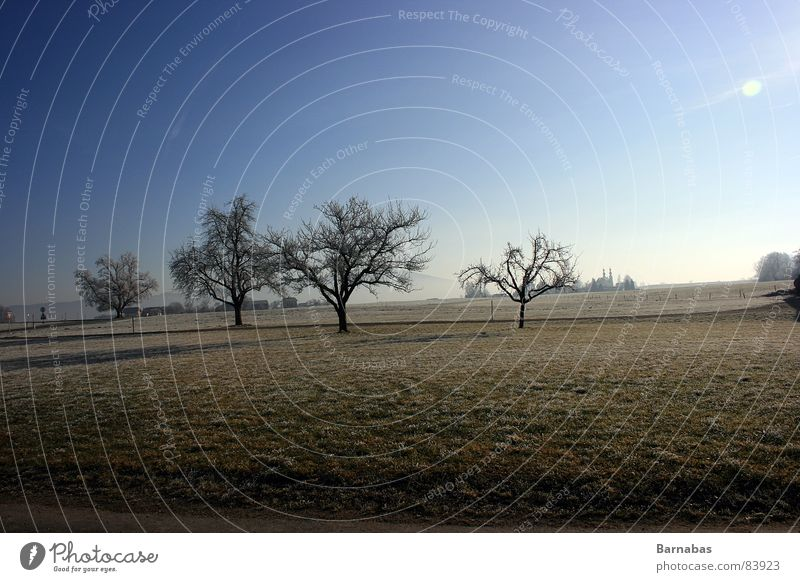 Sky Tree Sun Landscape Mountain Meadow Bavaria