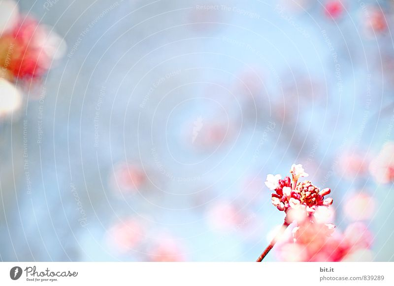 Nature Blue Summer Flower Blossom Spring Happy Feasts & Celebrations Garden Art Pink Design Decoration Birthday Joie de vivre (Vitality) Kitsch