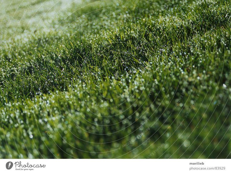 The grass is green Grass Meadow Green Blade of grass Dew Wet Green space Grass surface Summer