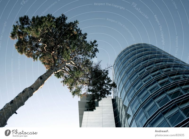 Tree and house Office building Company Corporate building House (Residential Structure) Facade Glas facade Window Agency Cottbus Converse Environment