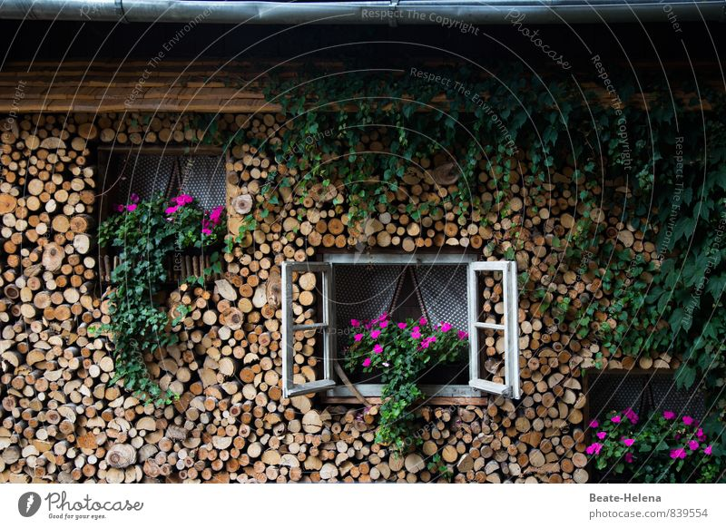 Nature Plant Summer Relaxation Red Flower House (Residential Structure) Environment Window Warmth Wall (building) Architecture Blossom Wall (barrier) Wood Happy