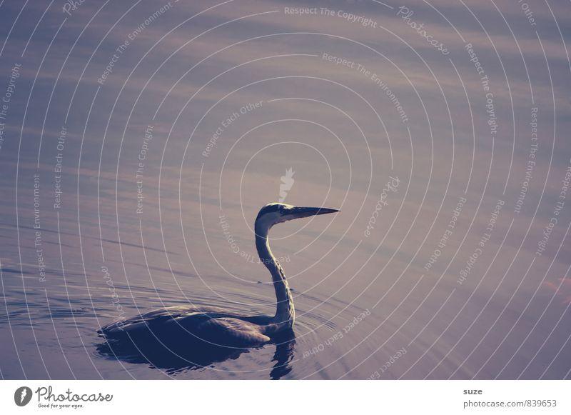 Nature Beautiful Water Landscape Animal Dark Environment Swimming & Bathing Lake Moody Bird Wild Elegant Wild animal Esthetic Feather
