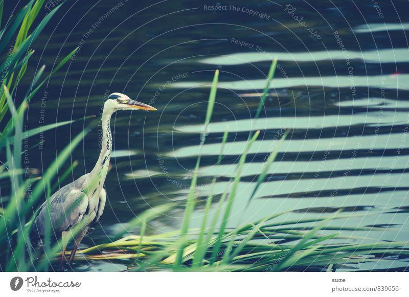 Nature Green Water Landscape Animal Environment Natural Lake Bird Wild Elegant Waves Wild animal Authentic Stand Wait