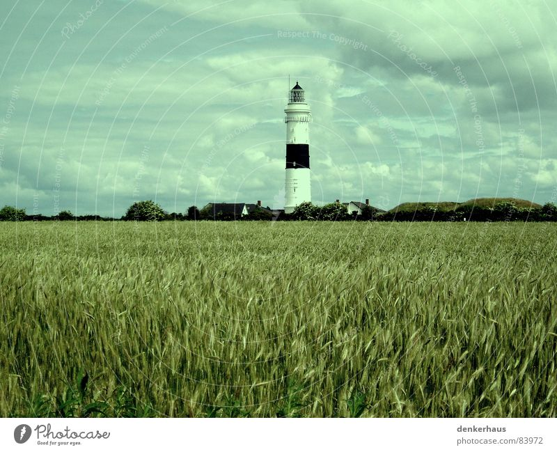 more light! Lighthouse Ocean Lamp Coast Red White Cornfield Field Clouds Horizon Nostalgia Midday Landmark Monument Tower Bright Graffiti North Sea Grain