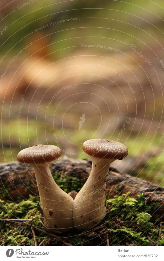 Nature Plant Green Forest Autumn Natural Brown Together Earth Soft Attachment Relationship Moss Mushroom Teamwork Beige