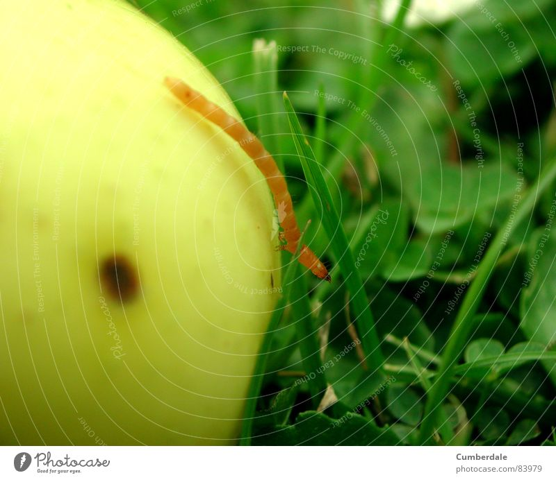 rent my apple? Insect Disgust Damp Small Slowly Grass Green Beautiful Round Delicious Fresh Juicy Brown Yellow Summer Physics Sunbeam Blue Flower Worm