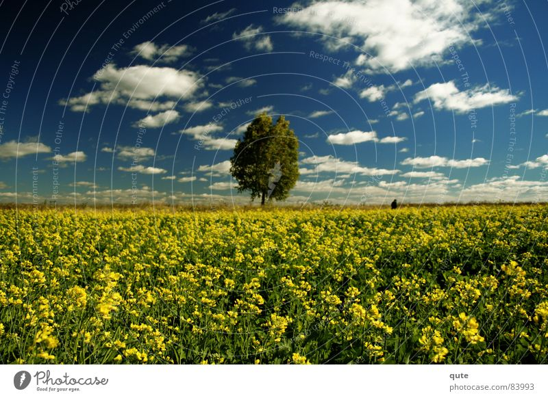Someone gone, someone stay Yellow Summer head-in-the-clouds tree bloom flowers meadow horizon Skyline
