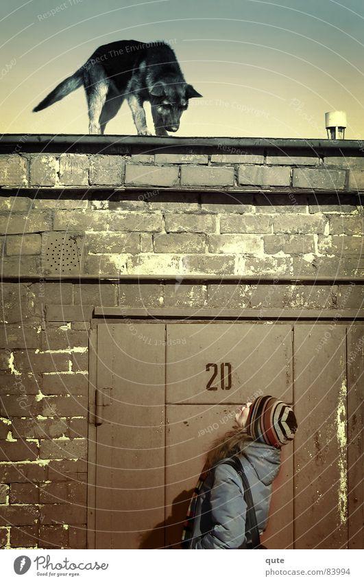 Animal Wall (barrier) Safety Garage