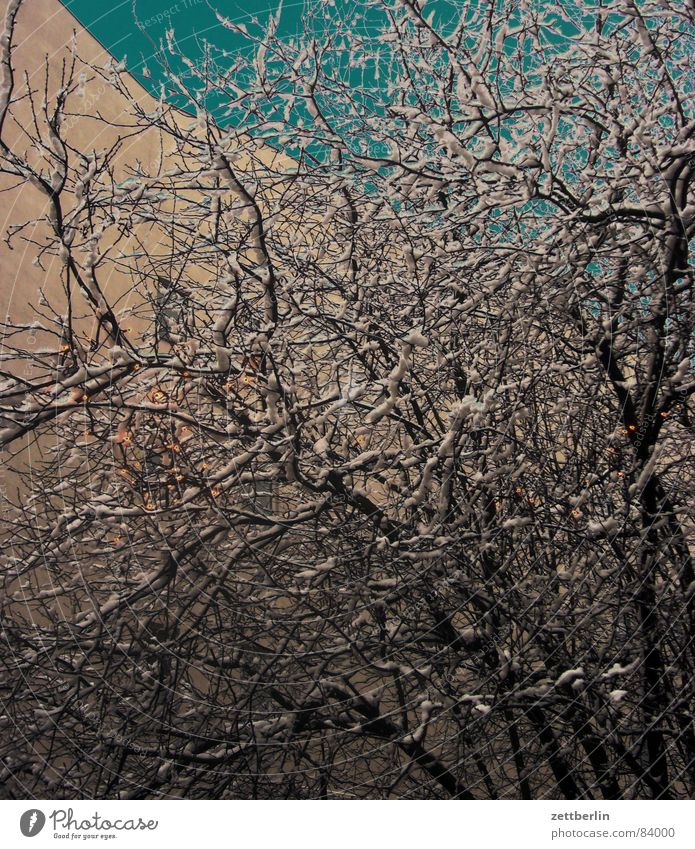 winter Off-Season Powder snow Snow layer Hoar frost Bushes Fairy lights Facade House (Residential Structure) Whipped eggwhite Fishing rod Hedge Virgin forest