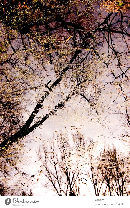 forest fantasies II Snowscape Forest Fantasy literature Reflection Green Branchage Tree Nature Leaf Blur Muddled Glittering Dream Magenta Physics muddled up