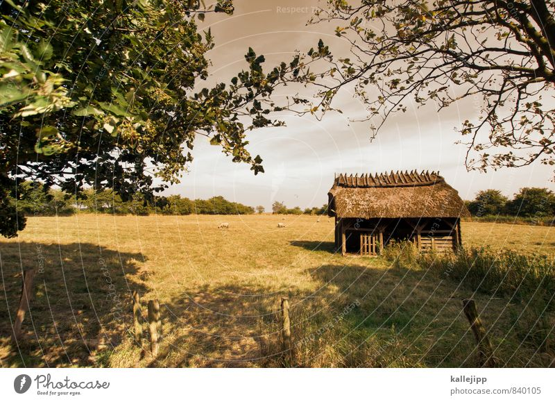 fairytale hut Environment Nature Landscape Plant Animal Summer Weather Grass Meadow Field House (Residential Structure) Hut Roof Old Pasture Sheep shelter