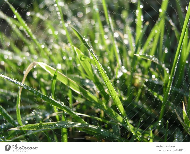 Nature Beautiful Green Joy Meadow Grass Lighting Glittering Drops of water Wet Rope Fresh Lawn Damp Dew Blade of grass