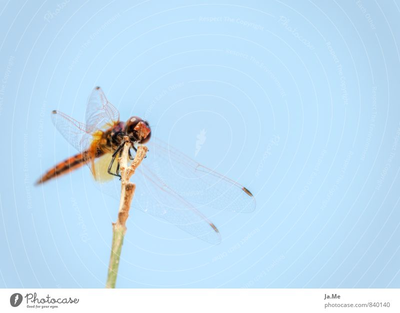 Blue Green Red Animal Wild animal Wing Insect Dragonfly Dragonfly wings