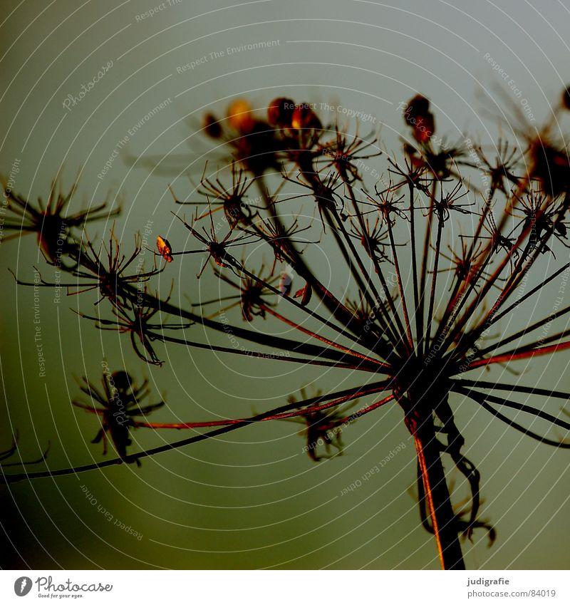 Nature Plant Autumn Death Lake Environment Star (Symbol) Thin Transience Wild animal Dry Botany Shriveled Thorny Faded Dried