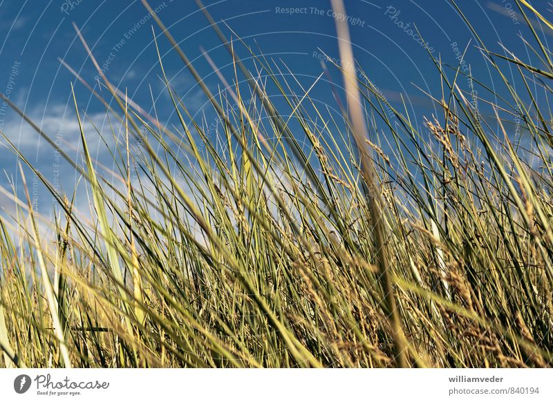 Green dune grass with blue sky Wellness Harmonious Well-being Contentment Calm Meditation Fragrance Vacation & Travel Tourism Trip Freedom Summer
