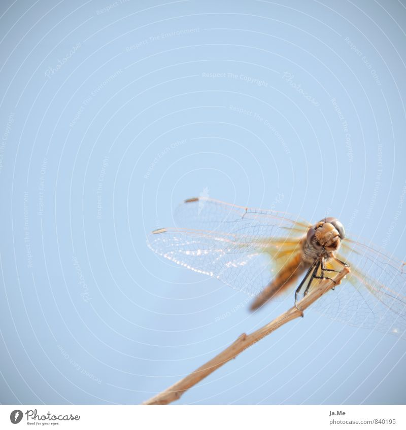 Sky Nature Blue Animal Yellow Air Glittering Gold Wild animal Wing Friendliness Curiosity Insect Animal face Interest Dragonfly