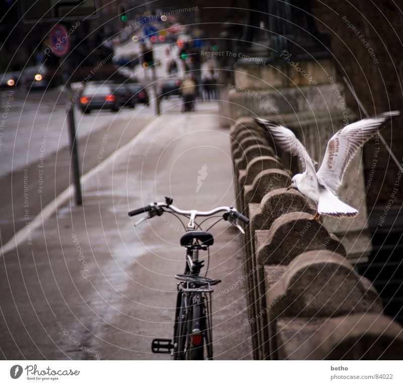 Car Bicycle Bird Road traffic Flying Transport Bridge Aviation Airport Traffic infrastructure Airplane landing Vehicle Seagull Traffic light Attack Runway