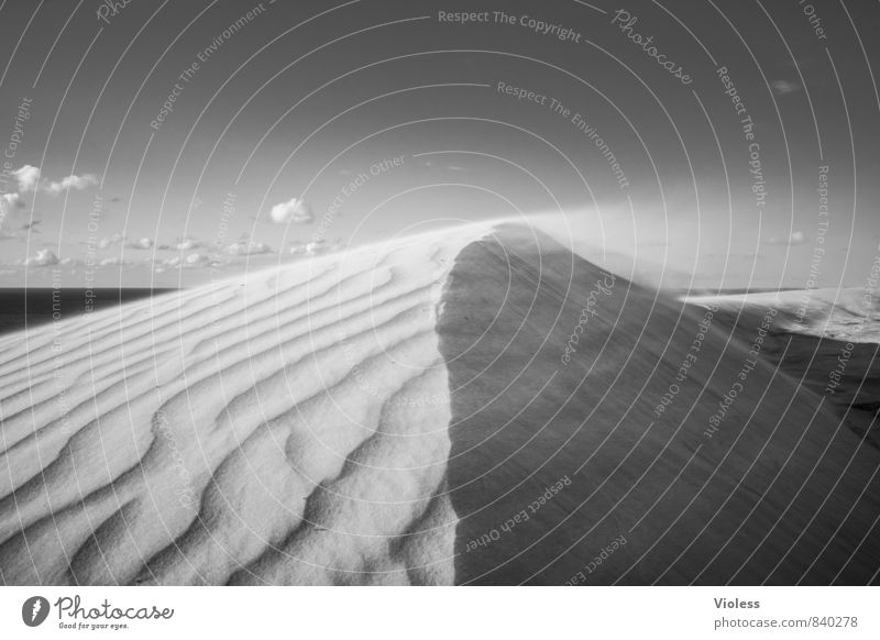sandstorm Adventure Expedition Environment Nature Landscape Elements Sand Gale North Sea Desert Black White Dune Structures and shapes Sandstorm Wind