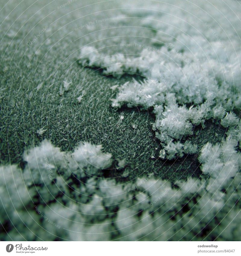frost I Winter Snow Weather Ice Frost Cold Climate Ice crystal Hoar frost Frozen Ice age Colour photo Subdued colour Exterior shot Detail