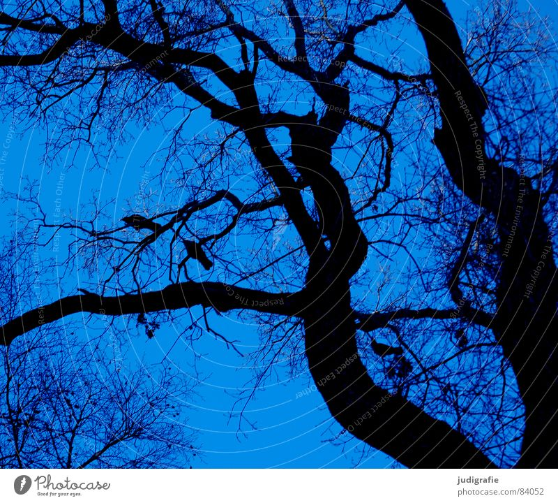 Nature Sky Tree Winter Black Forest Life Line Bird Environment Sit Growth Branch Tree trunk Twig Wilderness