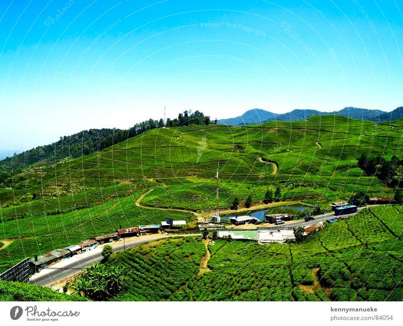 tea plantation Jacarta Panorama (View) peak landscape indonesia resorts villas Large