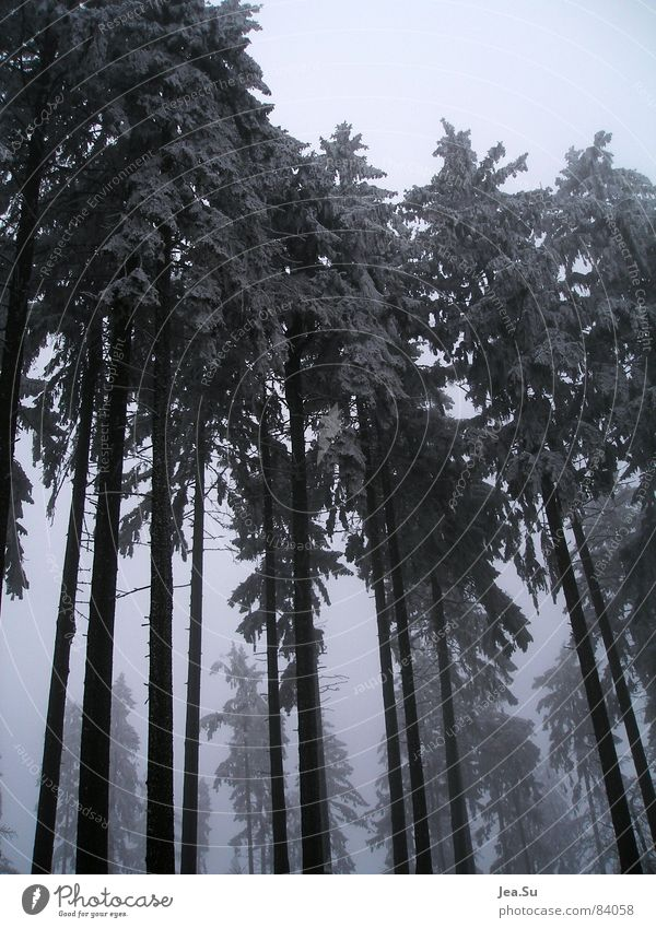 giants Dimension Might Forest Cold Winter Tree Monster Ogre Ice powerful natural giants Gigantic Size Massive chill Large forest ranger Snow