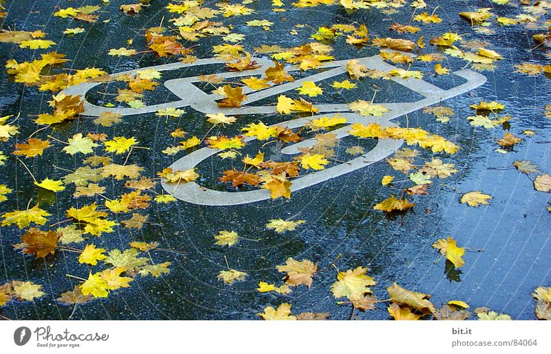 TABLOIDS Autumn Bad weather Rain Traffic infrastructure Lanes & trails Sign Signs and labeling Road sign Wet Yellow Maple tree Maple leaf Cycle path Pictogram