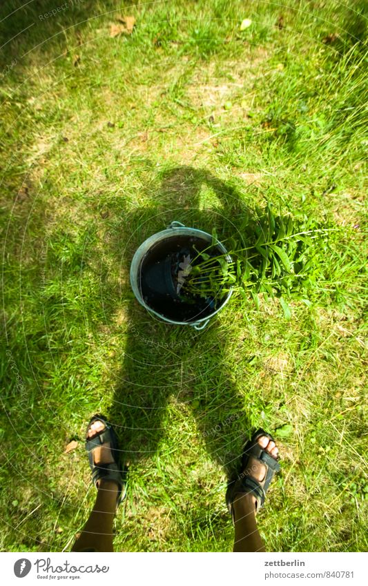 Shadow with bucket Grass Meadow Lawn Garden Bucket Feet Sandal Legs Stand Take a photo Self-made Vase Herbaceous plants Flowering plants Stalk Bouquet Summer