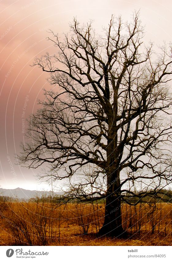 horror tree Steppe Muddled Threat Red Clouds Brown Tree Branchage Dark Fear Force Spook Sky Tall Gloomy Wild animal