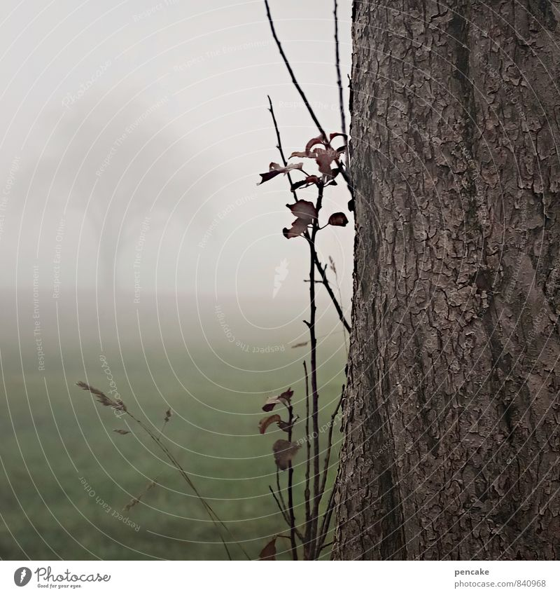 Welcome and farewell Nature Landscape Elements Autumn Climate Fog Tree Grass Field Seasons Tree trunk Tree bark Misty atmosphere Loneliness Goodbye Colour photo