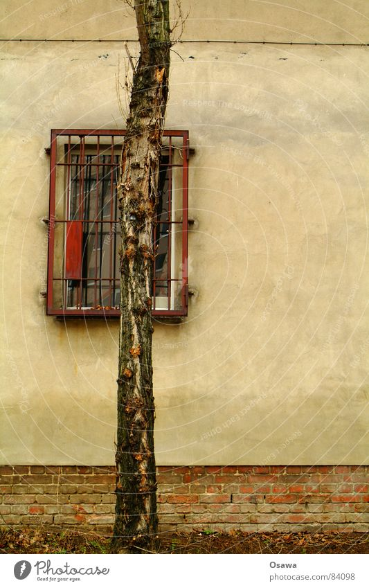 Nature Tree Plant House (Residential Structure) Wall (building) Window Gray Wall (barrier) Building Glass Construction site Manmade structures Cobblestones