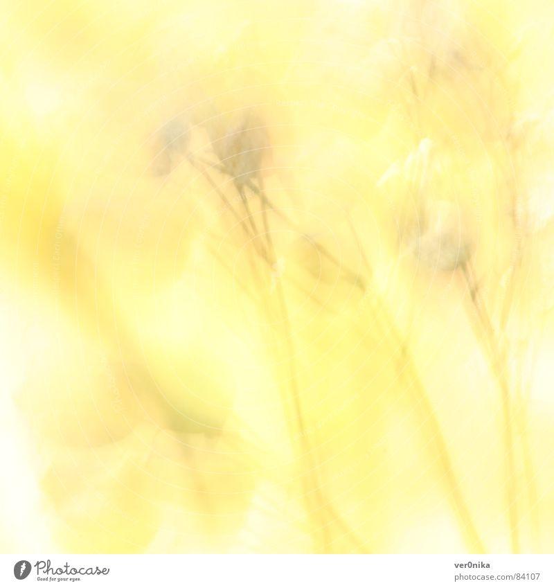 summer Summer Flower Field Sun Yellow Light Physics Warmth Meadow flower