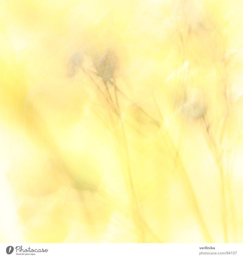 Sun Flower Summer Yellow Warmth Field Physics