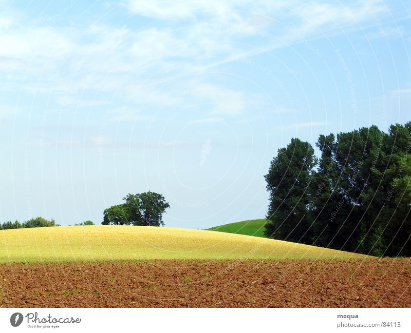 arable gold Plow Field Tree Forest Horizon Sun Shadow Progress Hill Meadow Yellow Brown Green Agriculture Beige Earth Environment Clump of trees Vantage point