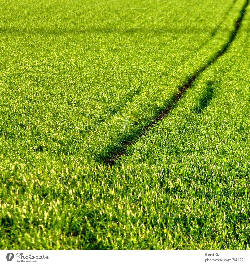 Green Summer Nutrition Grass Lanes & trails Line Field Wind Food Crazy Square Agriculture Harvest Blade of grass Grain Diagonal