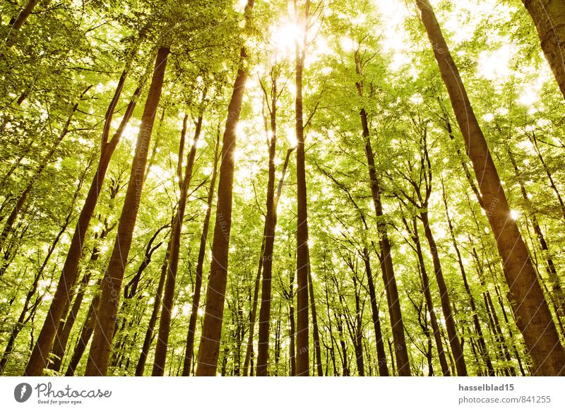 Vacation & Travel Summer Tree Relaxation Calm Far-off places Forest Life Spring Healthy Contentment Tourism Hiking Trip Adventure Wellness