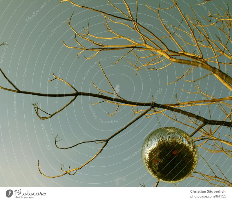 Sky Tree Yellow Branch Mirror Sphere Twig Globe Planet Map Disco ball Dance hall Rocket flare