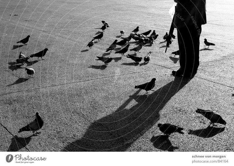 Sun Winter Calm Black Warmth Senior citizen Bird Contentment Break Physics Umbrella Serene Male senior Dusk To feed Boredom