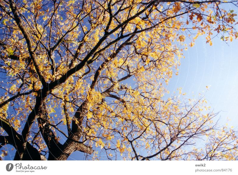 Orange and blue Colour photo Multicoloured Deserted Copy Space right Day Contrast Sunlight Downward Environment Nature Landscape Plant Air Cloudless sky Autumn