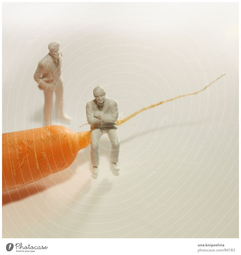 orange Food Nutrition Organic produce Healthy Healthy Eating Model-making Couple Gloomy Orange White Miniature Carrot 2 Neutral color Benchmark Illuminating